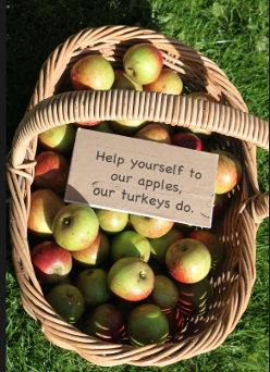 Help yourself to our apples, our turkeys do.